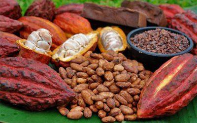 El cacao y el chocolate, son regalo de dioses. ¿Lo sabías?